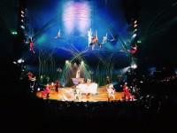 Cirque de Soleil Presents Their Newest Production Amaluna